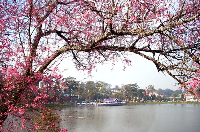 Hồ Xuân Hương cái nhìn đầu tiên về du lịch Đà Lạt