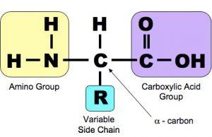 amino_acid_med