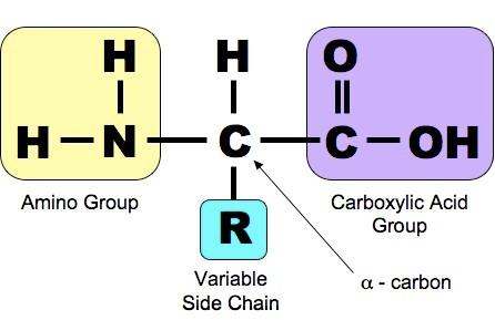 Vai trò của Amino Acid & Peptide với đất và cây trồng