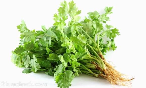Kỹ thuật trồng cây rau Mùi (Ngò Rí)