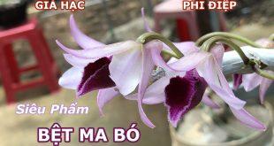 Siêu Phẩm Giả Hạc BỆT MA BÓ Mời các Bác Ngắm mặt Hoa và thân thể em nó | ChungFarm Orchid